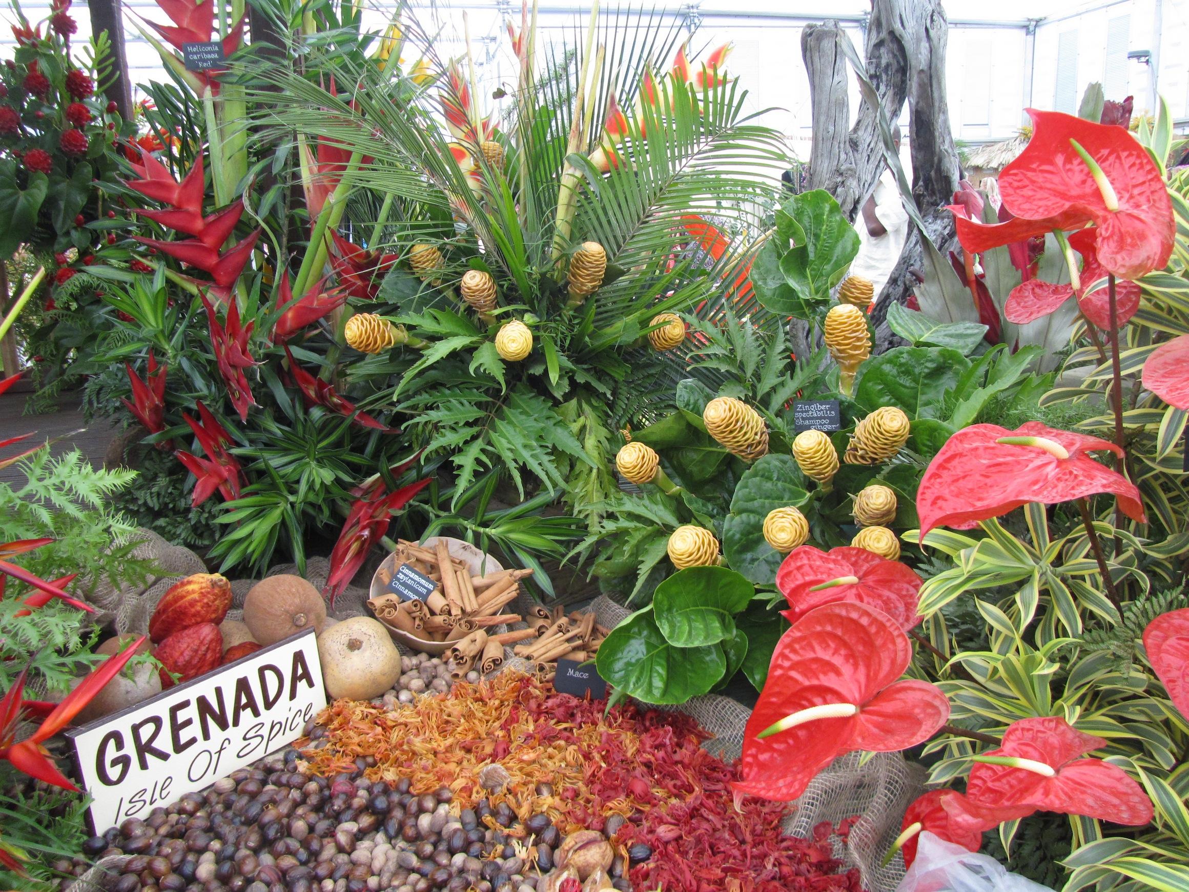 Grenada at Chelsea